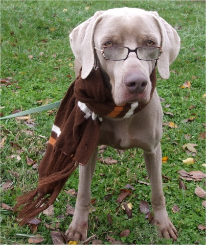 Professor Twister Weim